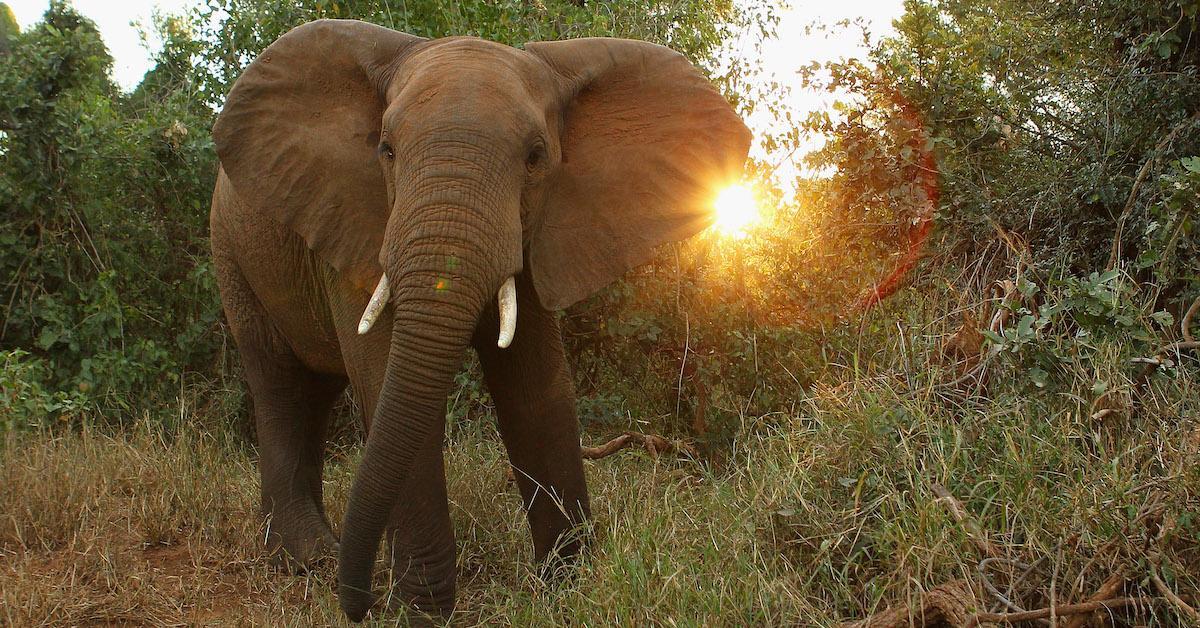 elephant-africa-botswana-hunting-1558712380559.jpg