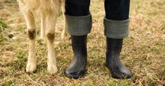Farm Animals Backyard Maintenance