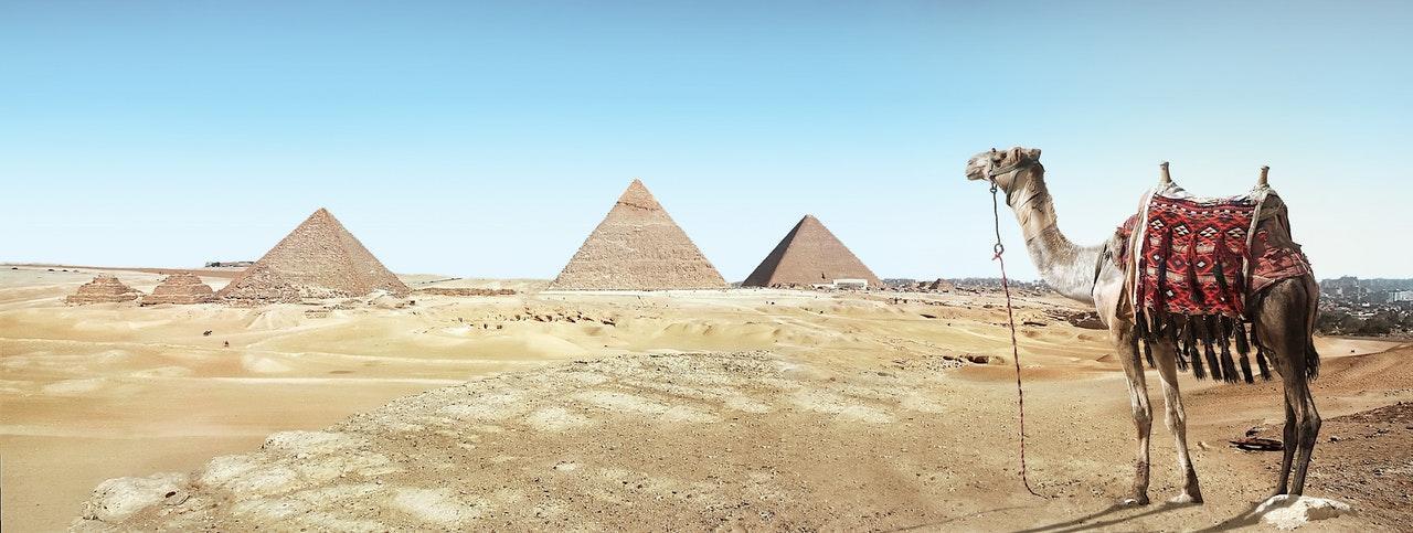 egypt-camels-desert-1533148938082-1533148939787.jpeg