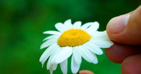 什么花是可食用的
