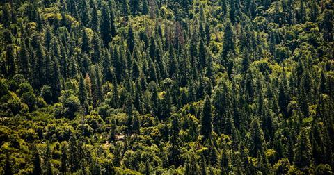 sequoia fires
