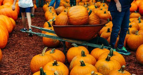 autumn-pumpkins-at-a-pumpkin-patch-picture-id1163824420-1603220792674.jpg