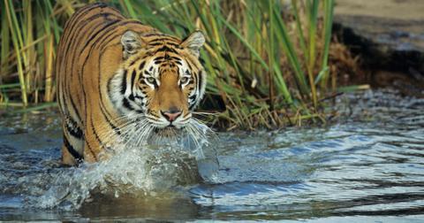 保护濒临灭绝的物种