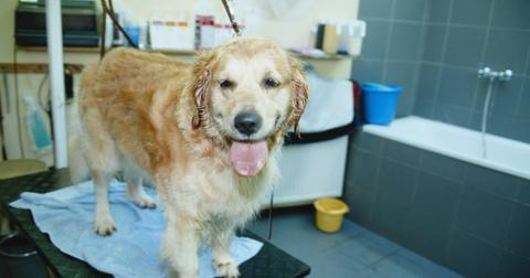 how-often-should-you-bathe-your-dog2-1609816165730.jpg