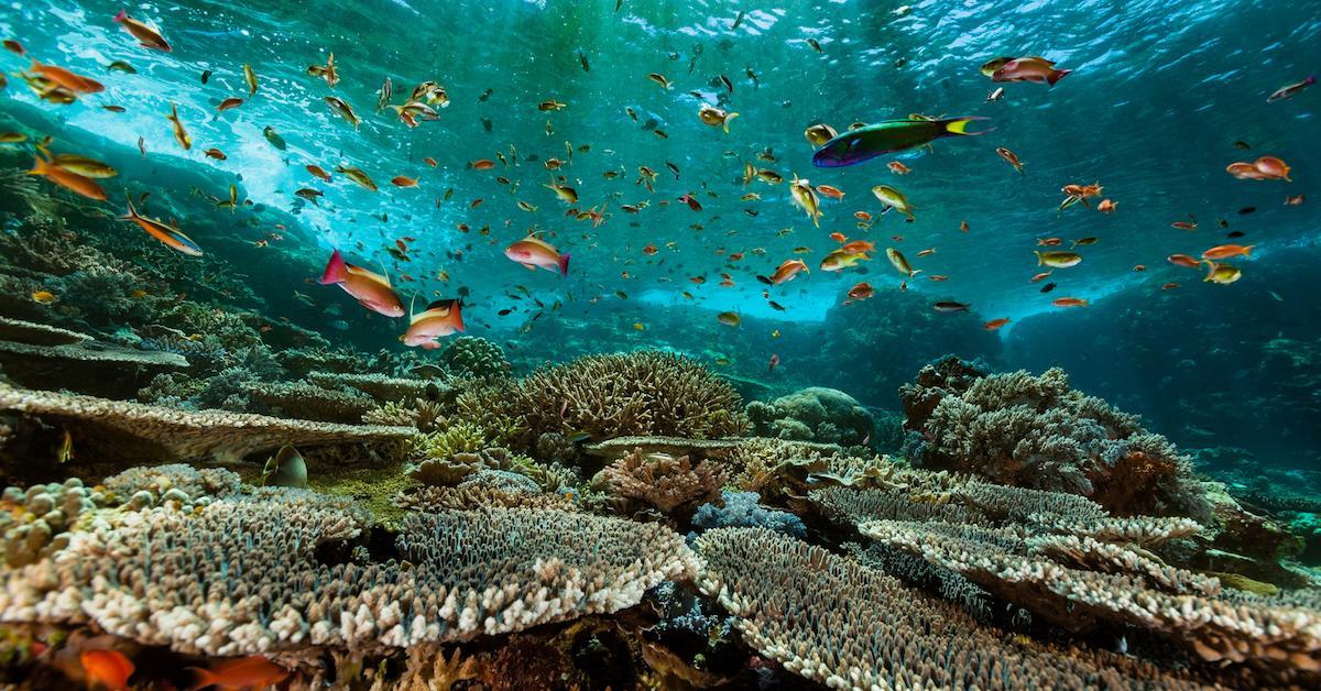 oceans-1585765667745.jpg