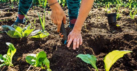 why-gardening-is-important5-1607990477433.jpg