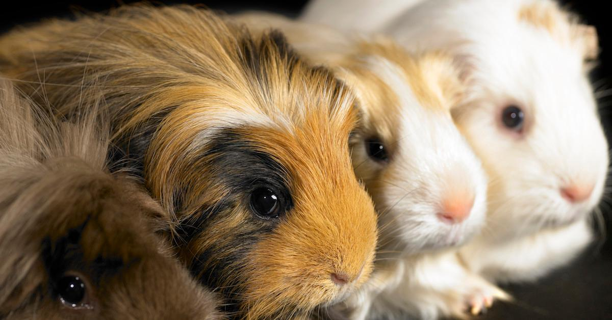 How is makeup tested on animals?