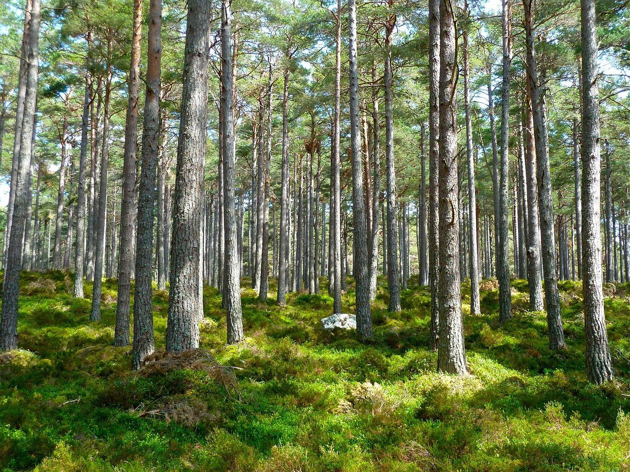 forest-272595_1280-1499296718520.jpg