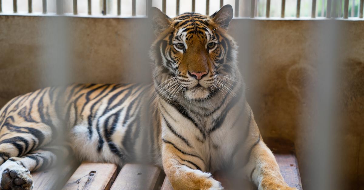 circus-animal-bill-1558468963558.jpg