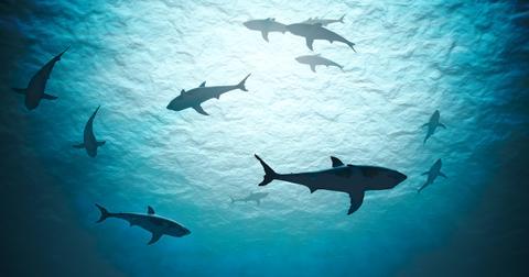 shark-infested-waters-1596135597103.jpg