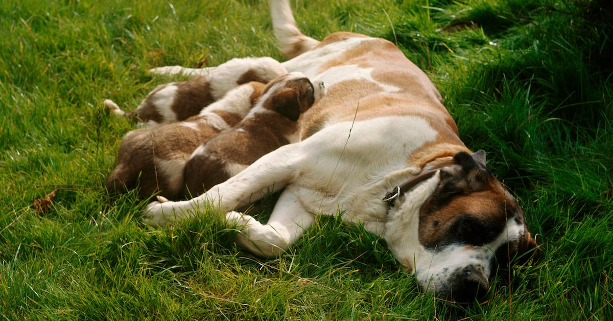 What to do when your pet goes into labor