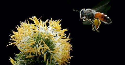 save-bees-1605899981121.jpg