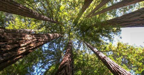 forest-tree-1590767675223.jpg