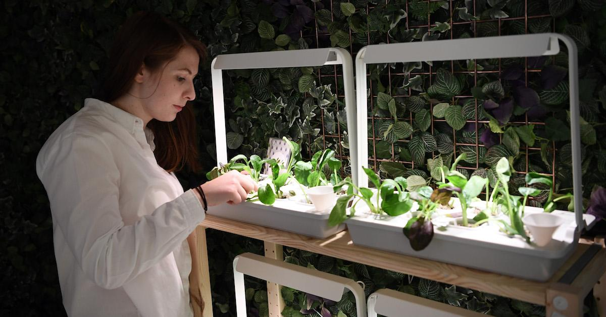 How to start hydroponic farming