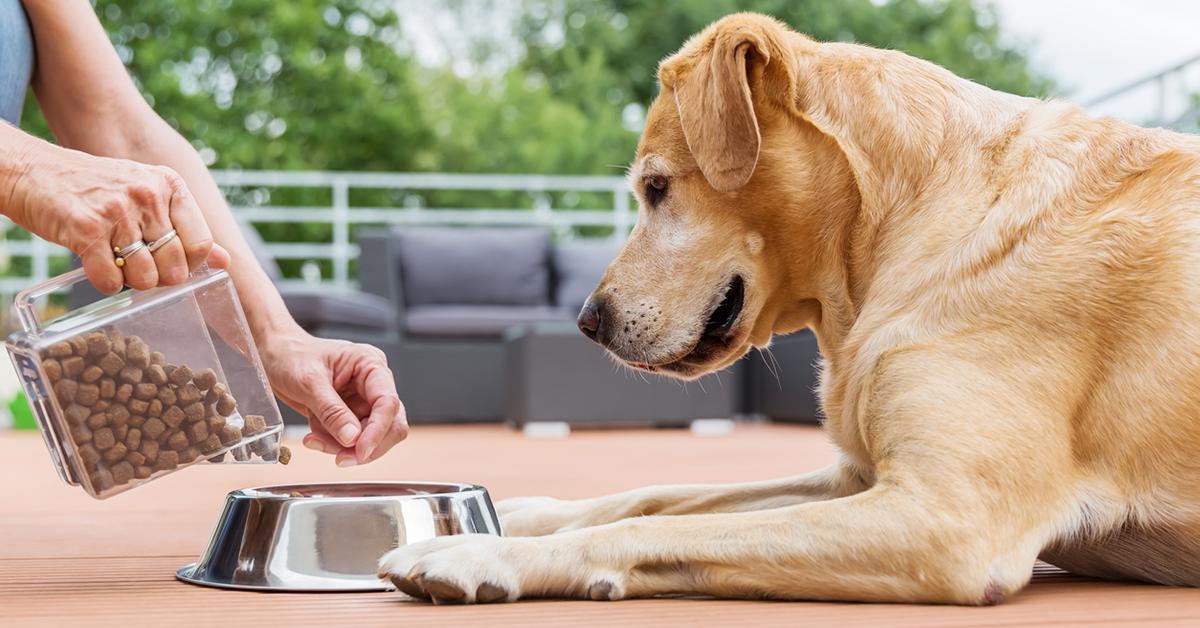 dog-food-bulk-1545670221905.jpg