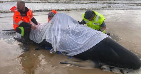 australia-whale-stranding-1600963628959.jpg