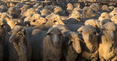is-wool-actually-sustainable-1600807790248.jpg