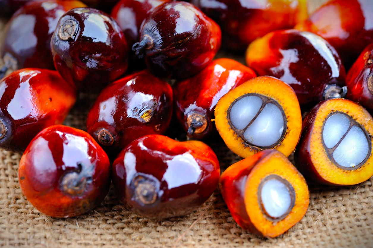 environmentally friendly palm oil fruit