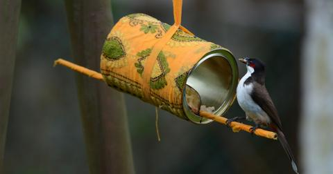 diy-bird-feeder-crafts-1585851472299.jpg