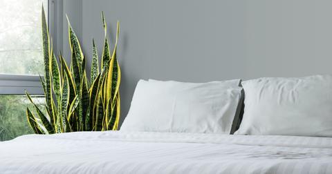 snake-plant-home-1550614276774-1550614278681.jpg