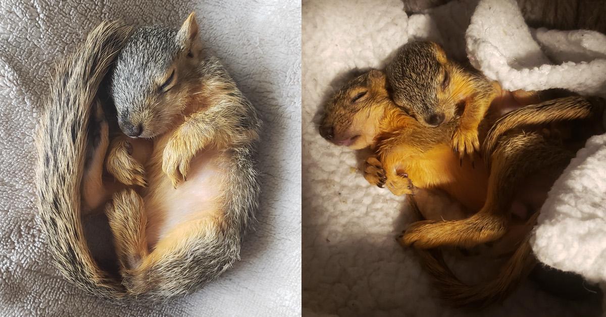 Squirrel School TikTok Wildlife Rescue