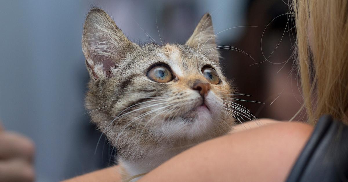 muncie-police-cat-1564592972489.jpg