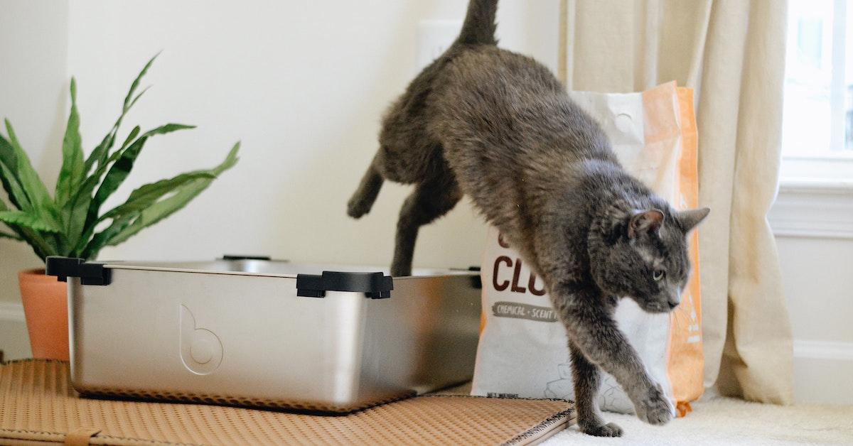 How to dispose of cat poop in an eco-friendly way