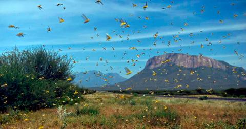 locust-swarm-3-1585337633681.jpg