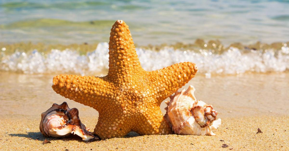 coaststarfishandshells-1536280469945-1536280472232.jpg