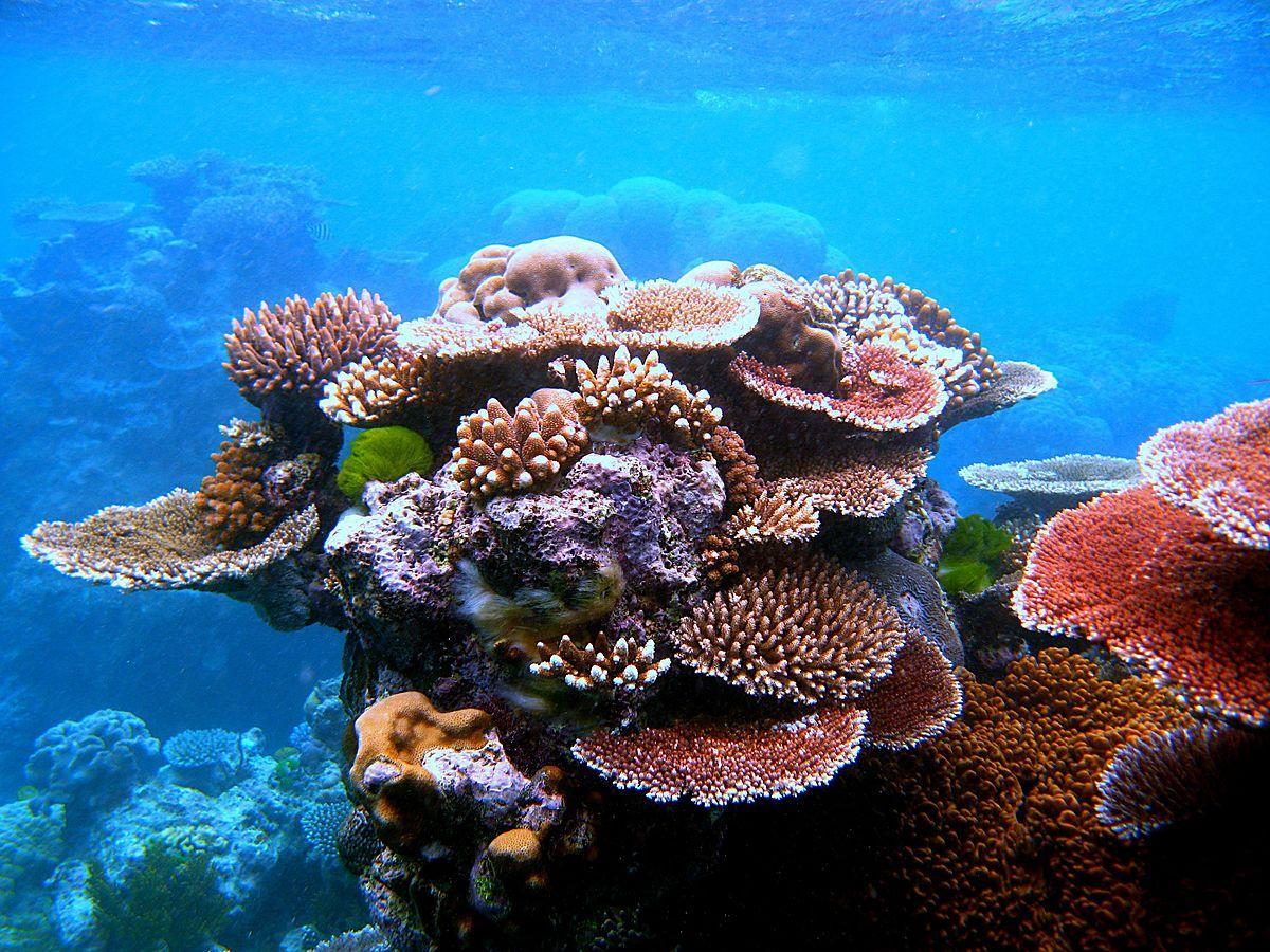 1200px-Coral_Outcrop_Flynn_Reef-1528388921419.jpg