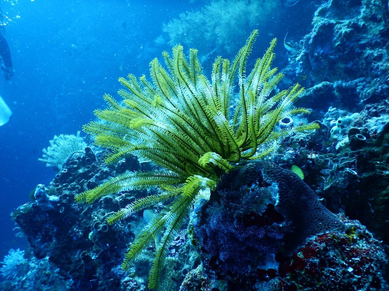 aquatic-close-up-coral-668790-1528388713424.jpg