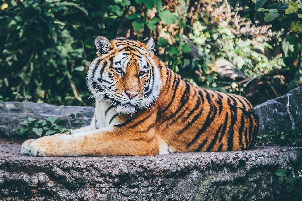animal-1868911_1280-1538607862200-1538607864180.jpg