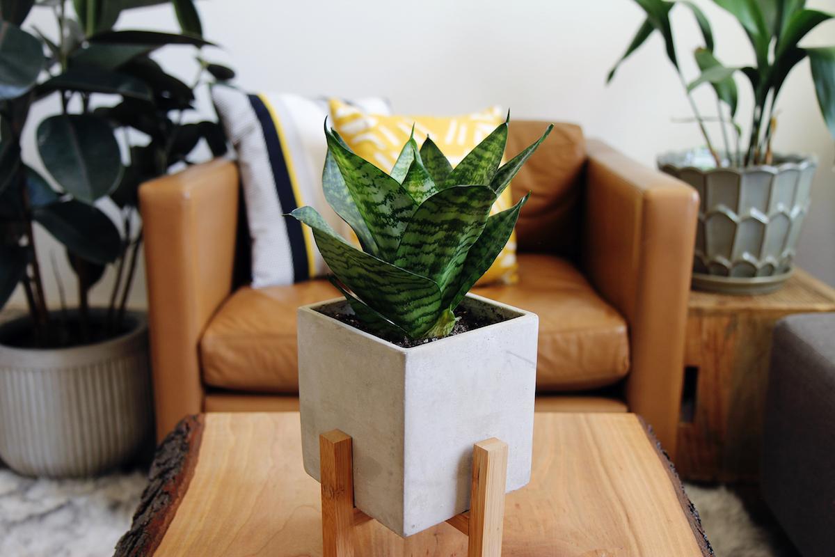 plant1-1520454514234.jpg
