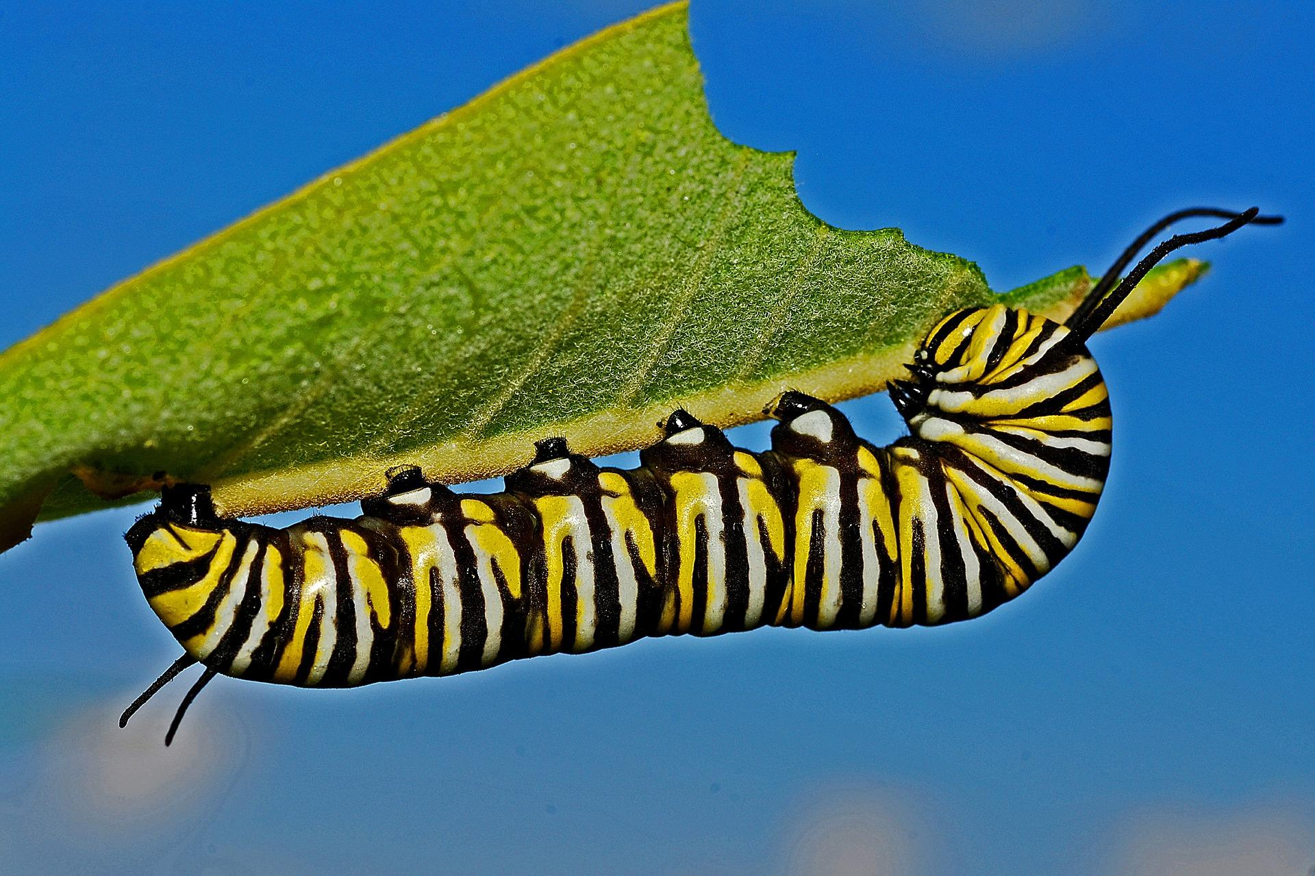caterpillar-562104_1920-1493224341950.jpg