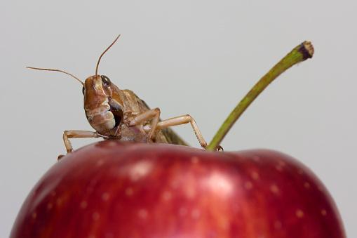 bug3-1493743249977.jpg