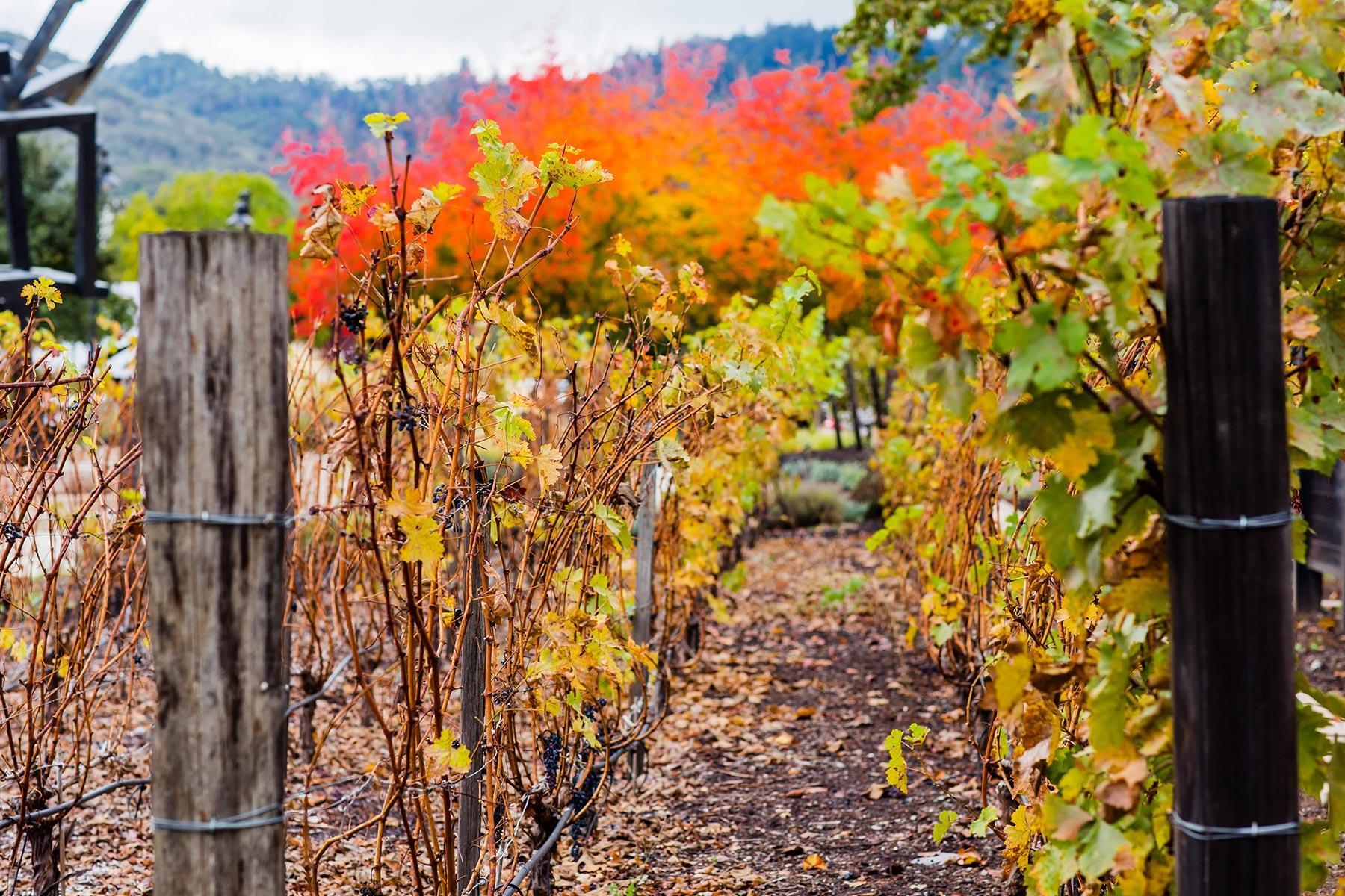 winery-1503242392626.jpg