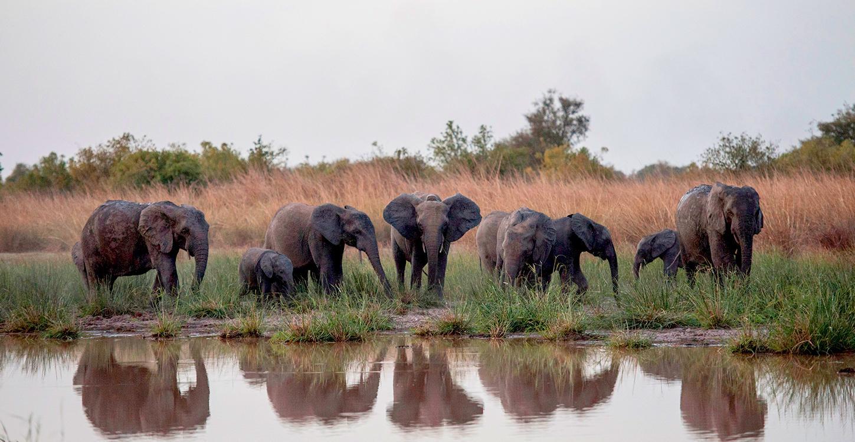 elephant1-1532435620729-1532435623477.jpg