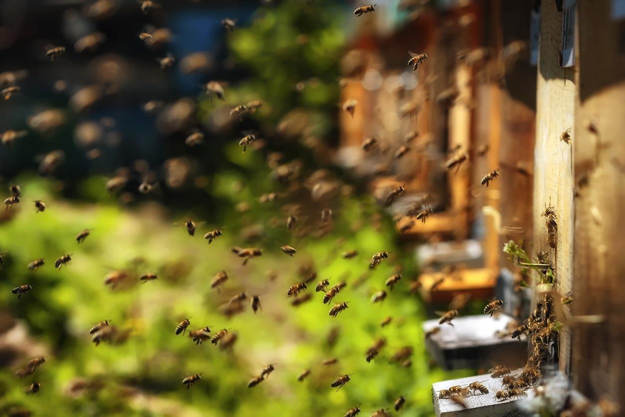bees1-1497987954625.jpg