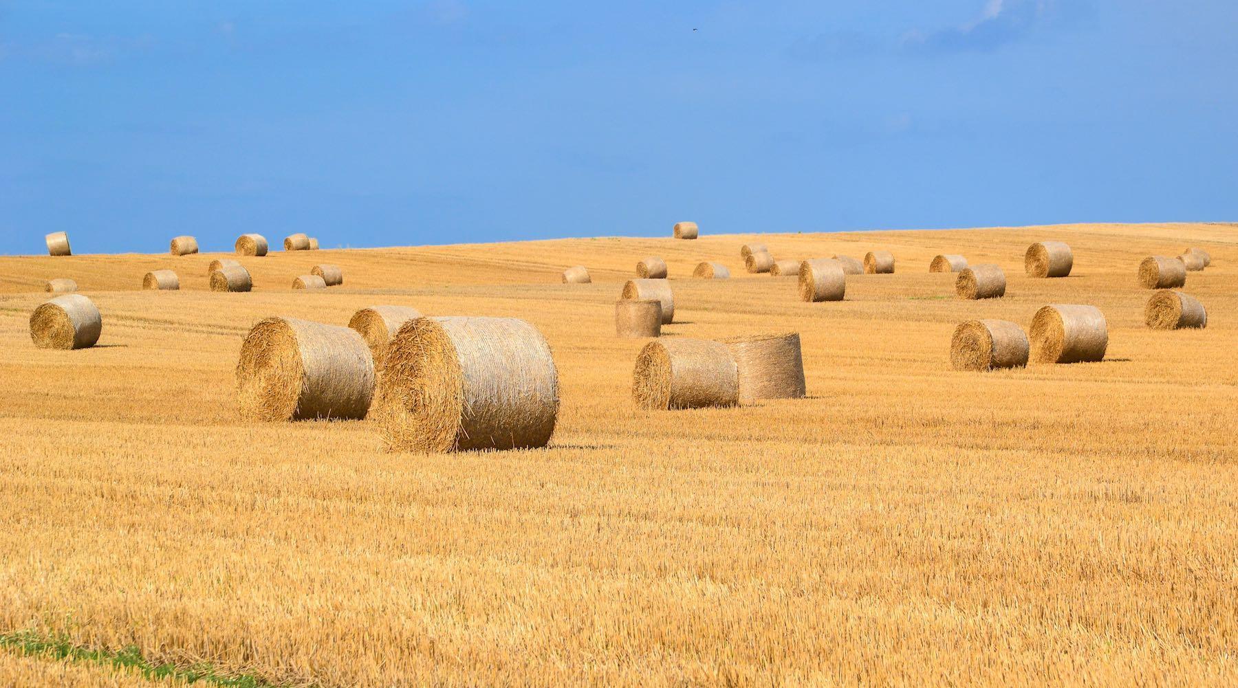 farmland-1517409275011.jpg