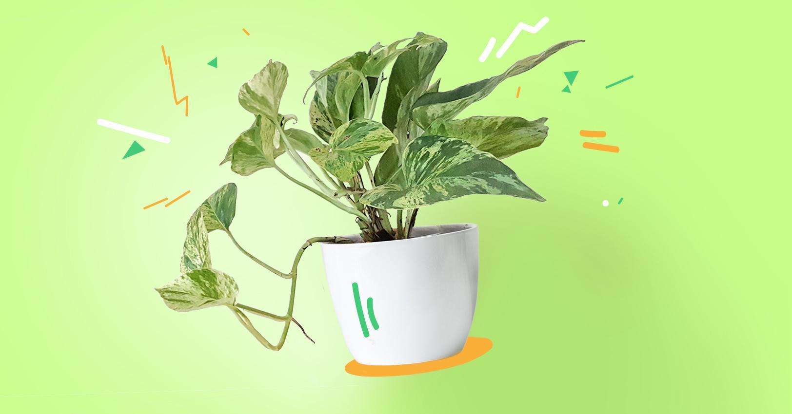 GM-PlantPersonalities-Pothos--1529522949713.jpg