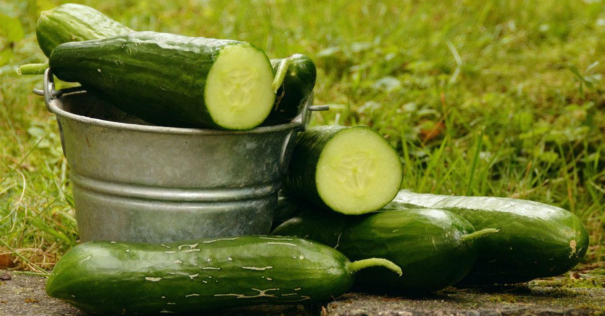cucumbers-1536094650668-1536094652336.jpg