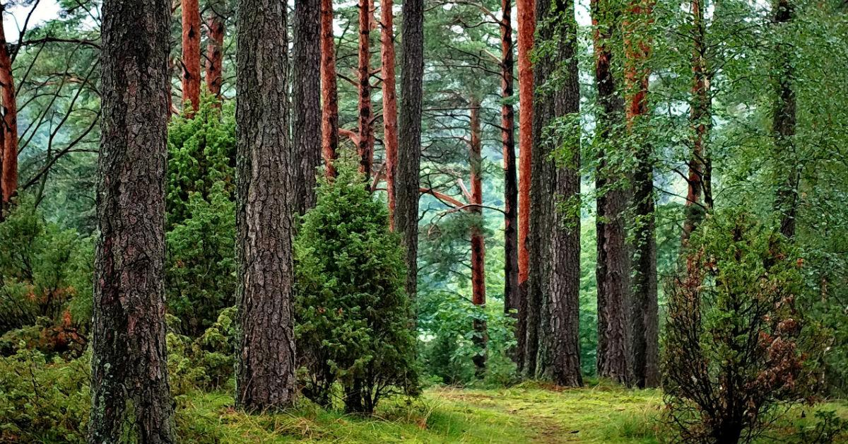 forest-nature-1541605684719-1541605687022.jpg