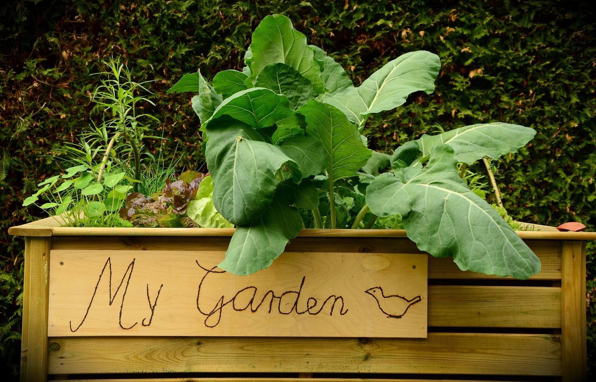garden-1427541_1920-1497462775594.jpg