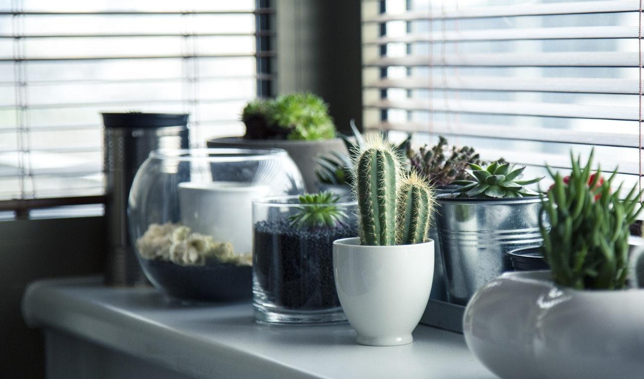 pots-plants-cactus-succulent-1511808886140.jpg