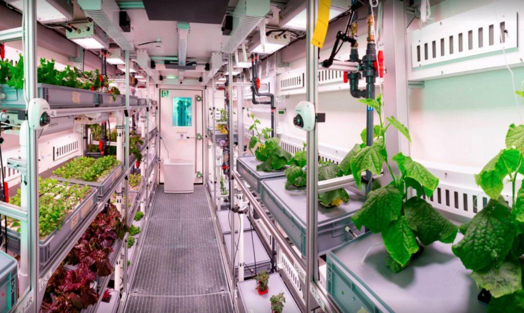GAC-scientists-are-building-a-vertical-garden-greenhouse-in-Antarctica-3-1020x610-1506117072893-1506117076807.jpg