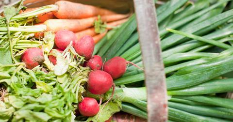 organic gmo farming
