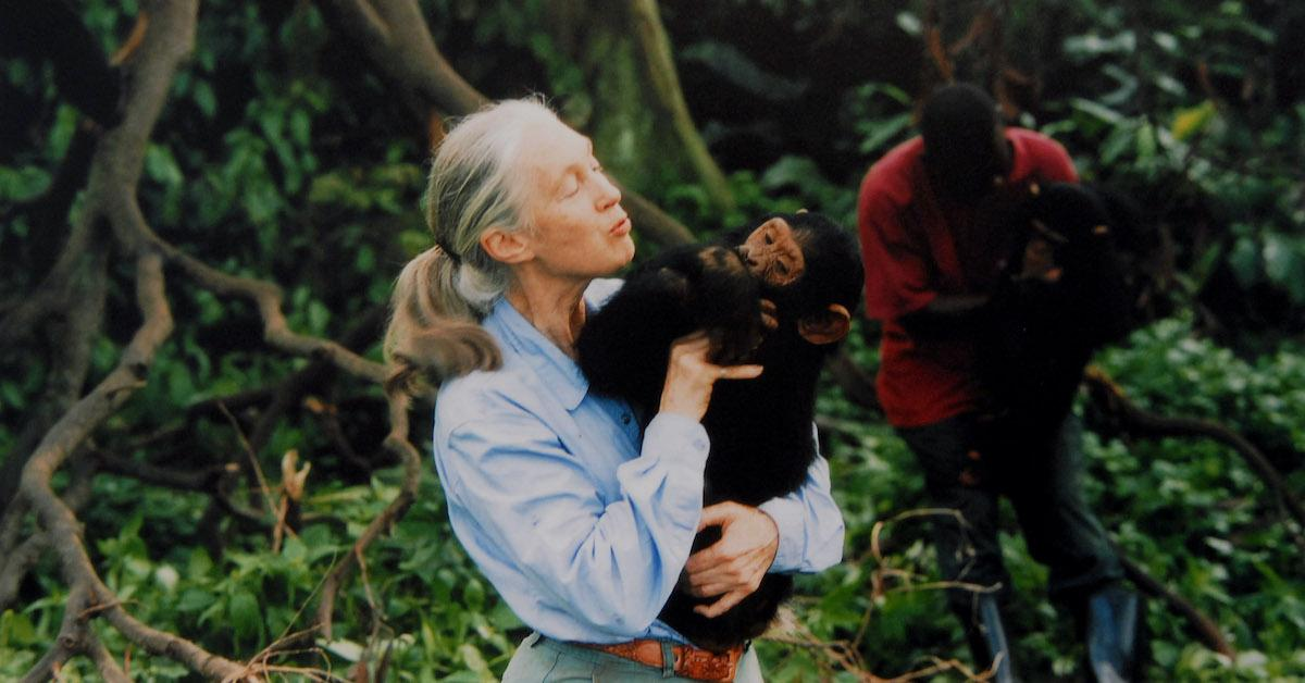 jane-goodall-chimp-environment-1575915886259.jpg