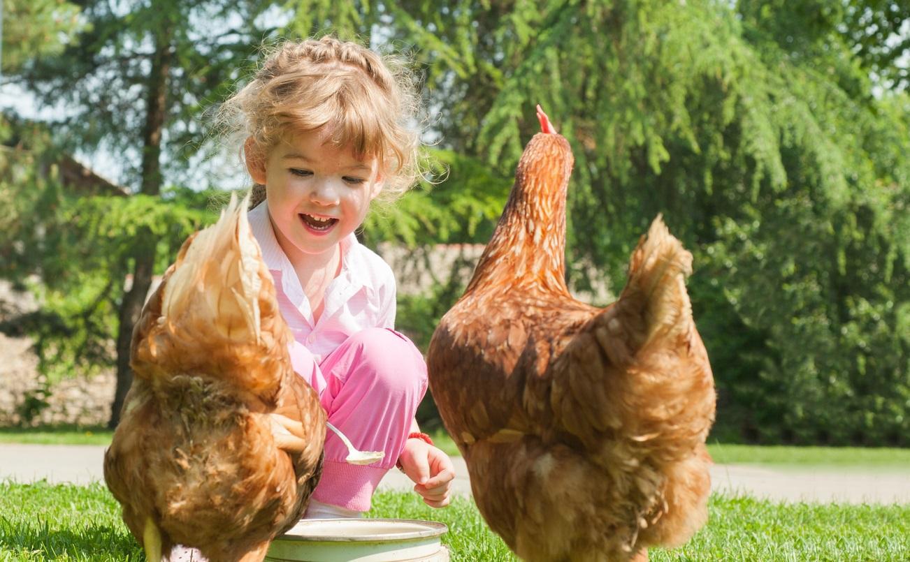 chicken4-1495818096787.jpg