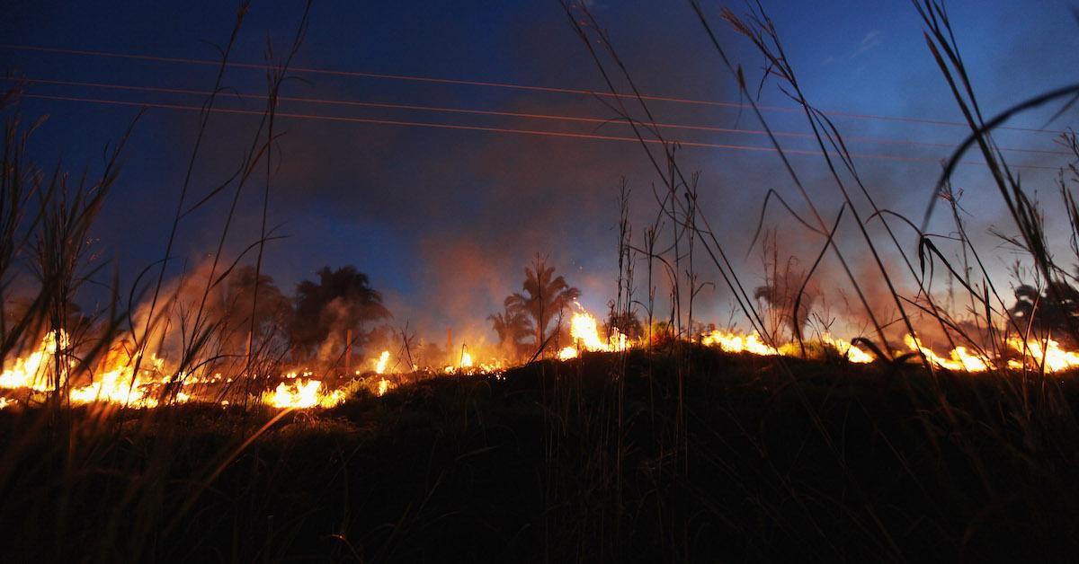 The Record-Breaking Amazon Rainforest Fires Could Be Detrimental to the Earth