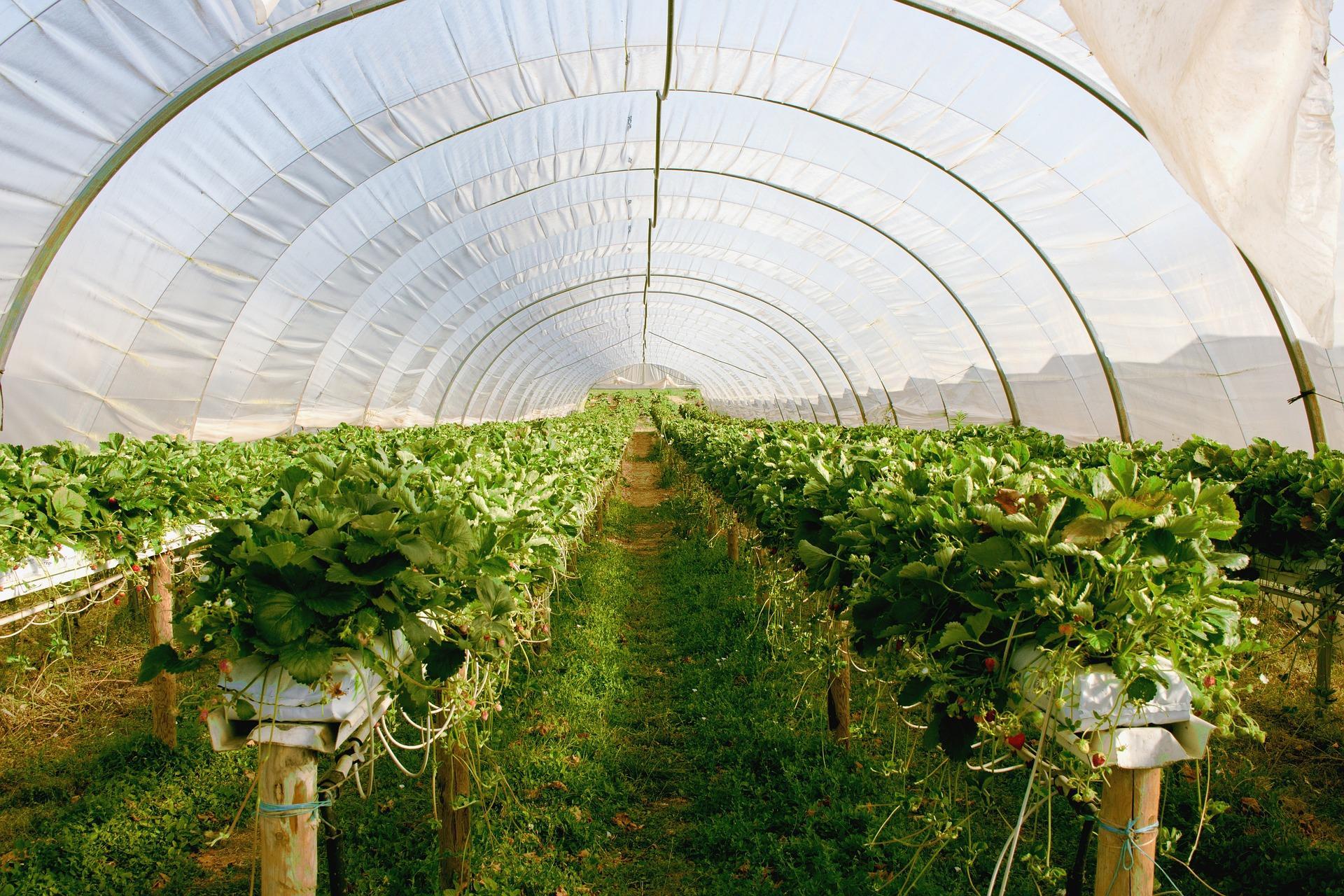 greenhouse-2096497_1920-1493827713320.jpg